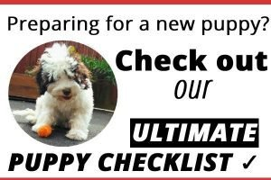 Cockapoo new puppy checklist