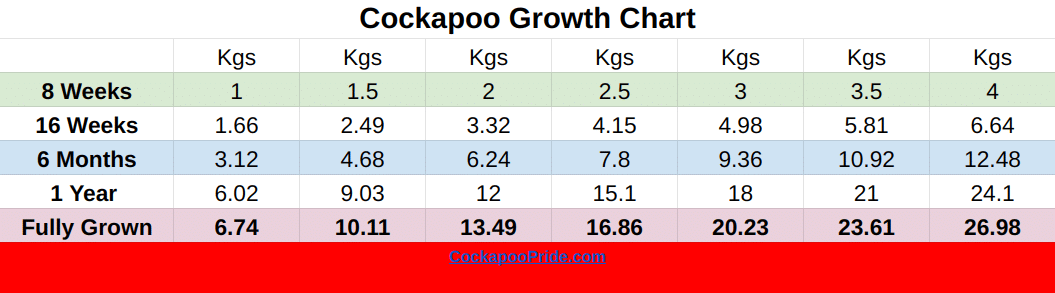 Cockapoo Weight Chart KG