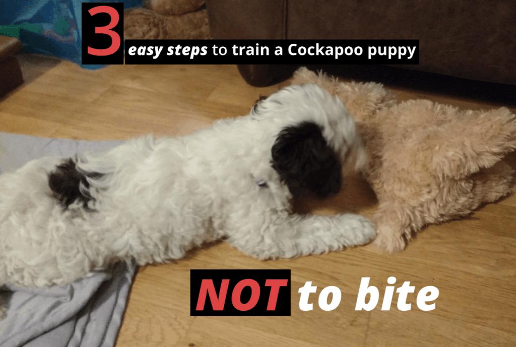 train a cockapoo puppy not to bite