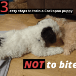 train a cockapoo puppy not to bite