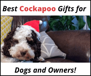 Best cockapoo gifts for dogs and owners