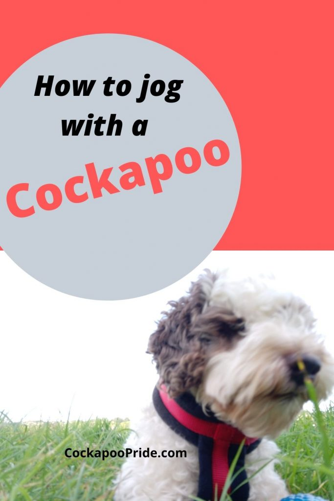 How to jog with a cockapoo