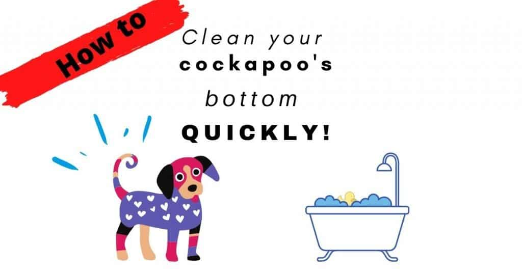 Cleaning poop stuck in cockapoo fur and bottom