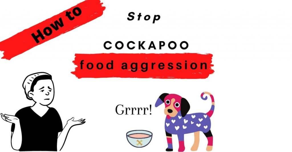 Cockapoo Food Aggression