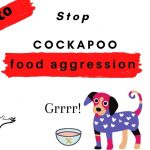 Cockapoo Food Aggression