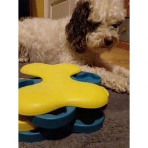 Puzzle toy to help prevent cockapoo barking