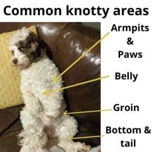 Common areas for Cockapoo Knots (1)