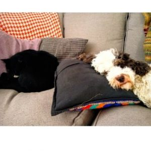 Cockapoo sleeping on a sofa with a black cat