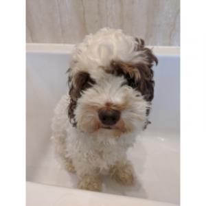 Dog in a bathtub after a muddy wet walk