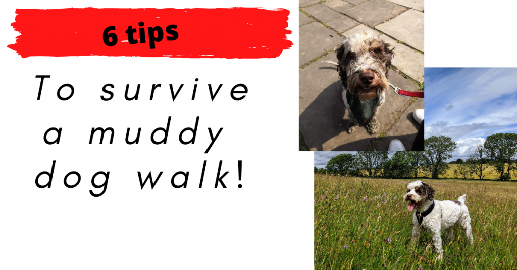 Tips to survive a muddy dog walk